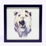 Lion Print in frame by Dan Mountford